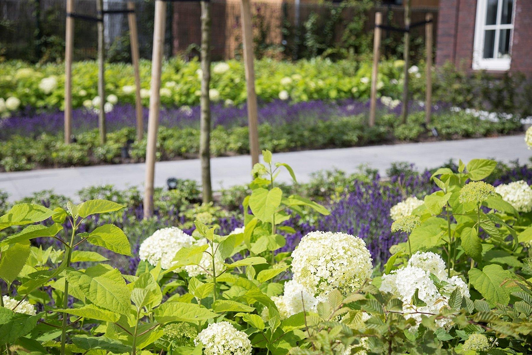 Snoeien van planten cm hand snoeischaar gereedschap tuin for Tuin snoeien